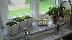 Ornamental Plants for Kitchen