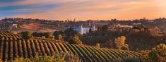 Experts: Drink These Italian Wines Before You Die