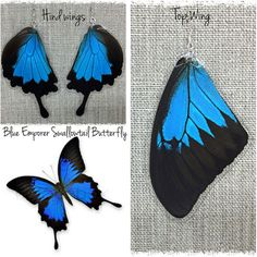 Blue Emperor Real Butterfly Wing Earrings- TOP wing ($22) ❤ liked on Polyvore featuring jewelry, earrings, blue butterfly earrings, earrings jewelry, monarch butterfly earrings, wing jewelry and butterfly wing jewelry