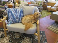 Mid-Century Modern, available also as a sofa. Teak arms/legs. Rugby loves it! -Available at Vllla Terrazza in Sonoma