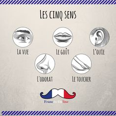Aujourd'hui on voit les cinq sens ! - Hoy vemos los cincos sentidos! - Today we see the five sences! - #Français #Francés #French #FLE #DELF #DALF #Language #Idioma #FrancésOnline #Frenchlanguage #learnfrench #Speakfrench #frenchclass #frenchcourse #Idiomafrancés #Aprenderfrances #cursodefrances #languefrançaise #apprendrelefrançais #Parlerfrançais #coursdefrançais #vocabulaire #Vocabulary #Vocabulario