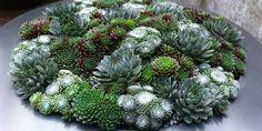 succulent combinations - Google Search