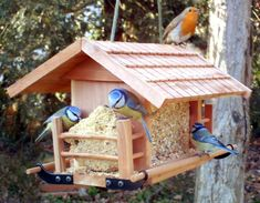 Fine Plan Maison Oiseaux that you must know, You?re in good company if you?re looking for Plan Maison Oiseaux Garden Bird Feeders, Diy Bird Feeder, Christmas Presents For Boys, Funny Bird, Bird Feeder Plans, Diy Dog Bed, Bird Boxes, Living Room On A Budget, Fauna