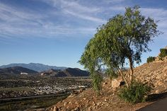 Mount Rubidoux, Riverside,CA - California Travel Blog - California Mountains, California Vacation, City Beach, Natural Disasters, Wildflowers, Vacation Ideas, Travel Photos, Places To See, Beaches