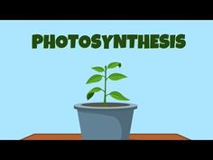 photosynthesis - video for kids Science Cells, Science Topics, Science Videos, Science Curriculum, Life Science, Science Classroom, Earth Science, Science Experiments, Food Science