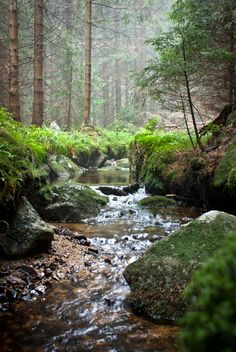 stream in the woods
