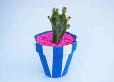 Cactus and hand-painted plant pot with blue stripes
