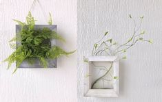 Look! Naughty plants climb out of the frame! Simply put the artificial plants or plant the real ones into three-dimentional frame. #frame #plants #Photo #dearlives