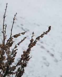Kauneus on katsojan silmissä  #talvi #winter #lumi #snow #tammikuu2018 #january #luonto #nature #naturelover #natureoffinland #seasonsoffinland #naturephotography #lifestyleblogger #nelkytplusblogit #åblogit #ladyofthemess