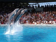 The Algarve's aquatic theme park Zoomarine, in Guia (Albufeira, Algarve), has been voted by leading travel website Tripadvisor as being among the top-25 theme parks in Europe. July 2013