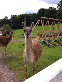 They had a lama at the photo shoot today along with some other animals. The shoot was circus themed and is for the next album