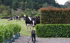 Nosy neighbours!