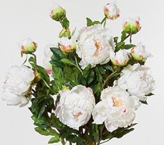 Peony Open Champagne 30 Inches High Set of 12 Sprays -- Continue to the product at the image link.