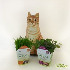 #HealthyPetFood is the best option for our pets! #Cats #CatFood