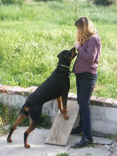 Proven Canine Training Tips and Techniques. Training your puppy can be a beneficial undertaking. Prior to starting, there are several things you need to understand in order to make training less chal Puppy Training Guide, Dog Clicker Training, Dog Training School, Training Your Dog, Training Schedule, Training Collar, Crate Training, Training Classes, Potty Training