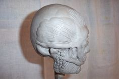 Musculature laid over skeleton made from clay