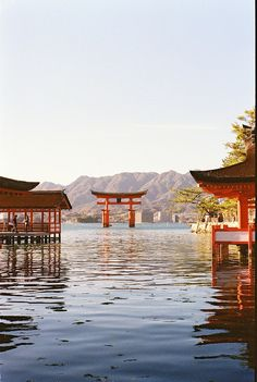 Torii. Looks peaceful, serene and calming. The sun, the water...