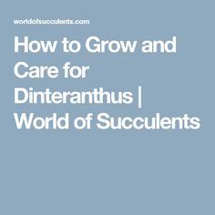 How to Grow and Care for Dinteranthus   World of Succulents