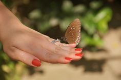 Butterfly farm in #Aruba - Photo by Missy of All Inclusive Outlet. She highly recommends the tour! #aioutlet