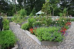 Veg garden in raised beds