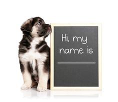 Tell us your favorite pet name for the chance to win a $10 PetSmart gift card! Simply post your pet name pick in the comments below by 11:59 pm EST August 30 and we'll pick a winner in the morning! Need some ideas? Check out these these pup-ular choices!