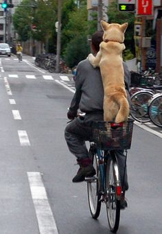 A dog friend sharing a bicycle ride. By Takato Marui, Osaka, Japan