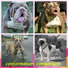 www.oneofakindbulldogs.com