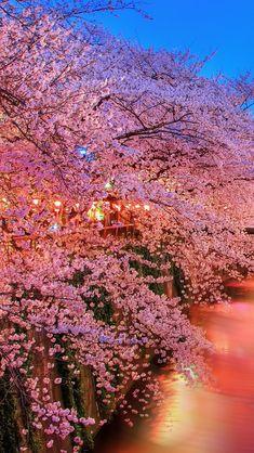 Dreamlike Spring  #iPhone #5s #Wallpaper