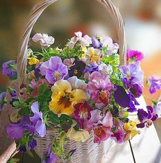 Absolutely Love the sheer simple joy of violas and pansies. This cheerful mixed basket shows why. Amazing Flowers, My Flower, Fresh Flowers, Spring Flowers, Flower Art, Beautiful Flowers, Flower Power, Cactus Flower, Exotic Flowers