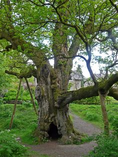 Dunkeld (Tree History in photographer's note), Scotland  Copyright: Alastair Seagroatt