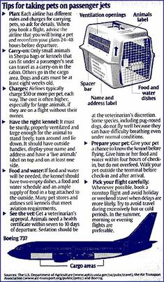 Airplane requirements for air travel with pets - Restrictions and carry-on bags.