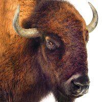 Meet our new spokesman! Francis A. Buffalo - he likes to be called Frank. http://www.youtube.com/watch?v=29yDDFMVv2U