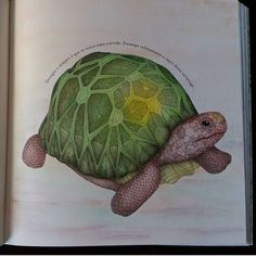 Tortoise Or Turtle From Animal Kingdom By Millie Marotta