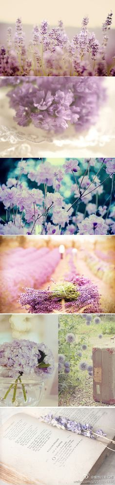 love the various shades of purple Simply Beautiful, Beautiful World, Beautiful Images, Flower Petals, My Flower, Purple Flowers, Beautiful Flowers, All Things Purple, Nice Things