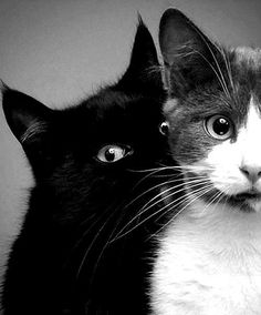 Incantatem tumblr two cats head/shoulder, black and tabby/white' great photo