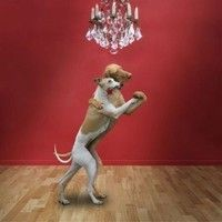 Two dogs tango dance
