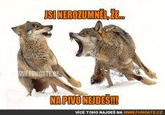 Photo Iberian Wolf by Jaime San Roman Villalon on Insanity Wolf, Type One Diabetes, Wolf Photos, Perfectly Timed Photos, Wolf Spirit, Perfect Timing, Rare Photos, Beautiful Creatures, Mammals