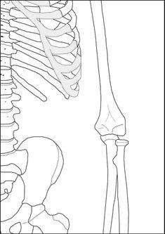 Human Body Bones, Human Body Unit, Skeleton For Kids, Preschool Sight Words, Emo Princess, Outline Art, Basic Drawing, Medical Terminology, Heart Day