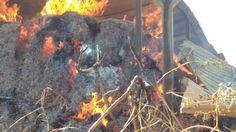 वनखड़ यथ शतकऱयचय गठयन आग दन लखच नकसन