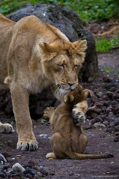 OMG ... momma is giving her baby a hug!! So sweet. Love in the wilderness.