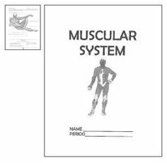 Black And White Muscular System Diagram Label Muscles