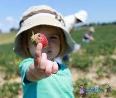 Image result for child picking strawberry Farmers Market, Strawberry, Mood, Children, Image, Young Children, Boys, Kids, Strawberry Fruit