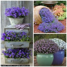 Rozeta handmade: Jakie kwiaty posadzić w maju, by kwitły do późnej jesieni? - czyli kwiaty na balkon i taras najdłużej kwitnące:-D