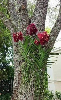 Trouxemos uma lista muito legal comBest 25 types of exotic tropical flowers for your home and Fresh Front Yard and Backyard Landscaping Ideas for 2019 Orchids Garden, Orchid Plants, Exotic Plants, Garden Trees, Air Plants, Trees To Plant, Garden Plants, Tropical Flowers, Exotic Flowers
