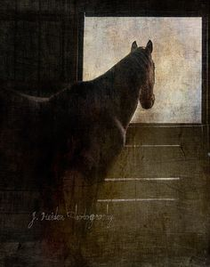 Because he told me so. by jamie heiden, via Flickr
