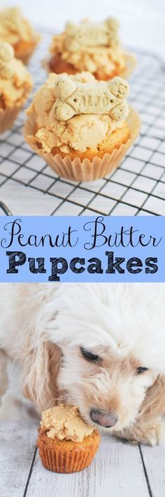 """Get together with friends and bake up these cute """"pupcakes""""! Peanut Butter Pupcakes - treat your pup to a fun dog-friendly cupcake! Puppy Treats, Diy Dog Treats, Homemade Dog Treats, Dog Treat Recipes, Dog Food Recipes, Homemade Butter, Cupcakes, Diy Pet, Food Dog"""