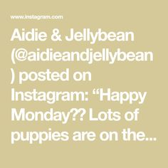 "Aidie & Jellybean (@aidieandjellybean) posted on Instagram: ""Happy Monday❣️ Lots of puppies are on their way today🐾🎁🐾 Working on a Netherland dwarf bunny this afternoon and more puppies to follow✨…"" • Mar 15, 2021 at 1:18am UTC Netherland Dwarf Bunny, Dwarf Bunnies, Toy Sale, Jelly Beans, Happy Monday, Puppies, Instagram, Amigurumi, Red Dates"