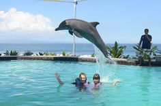Having fun with dolphins in Bali, Sanur