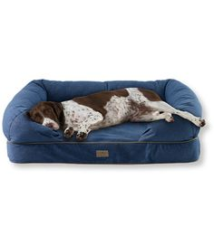LL Bean's Theraputic Couch - the best dog bed you will ever find.  The price is very reasonable and it's built to last.