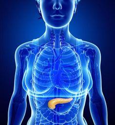 """Lernt euren Körper kennen! Zugegeben: Es gibt Organe, die klingen sexyer als """"Bauchspeicheldrüse"""", aber diese Drüse ist nun mal von großer Bedeutung für unsere Gesundheit. Welche Funktionen sie übernimmt, und wie ihr eine mögliche Entzündung vermeiden könnt, verrät unser Artikel. #IDFM"""